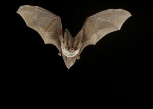 New Coronavirus Strains Exist In Bats, According To A Study