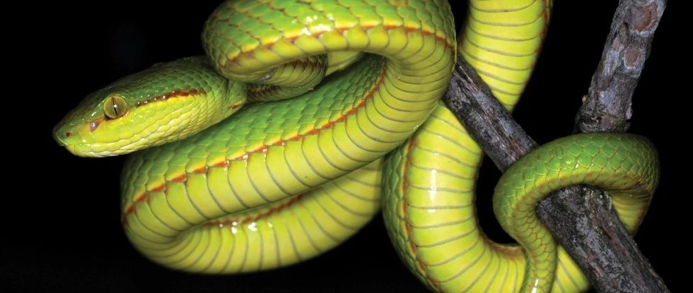 New Slithering Snake Species Was Named After a Character from Harry Potter