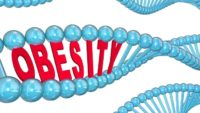 How Genes Contribute to Obesity