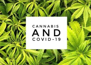 Cannabis As Cure For COVID-19: Experts See Promising Results