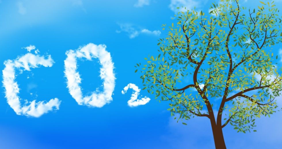 How Excessive Amounts of CO2 is Affecting Trees