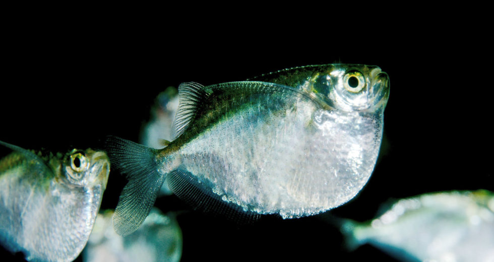 Peculiar New Research Shows How We're More Like Primitive Fishes Than Previously Thought