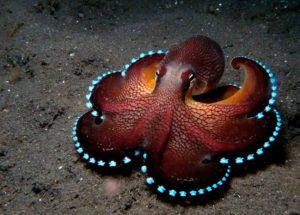 Study Finds Octopuses Feel Emotional Pain not just Physical Pain