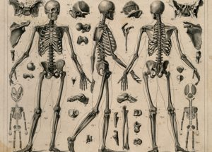 Thousands Of Human Skeletons Are Proof Of Evolutionary War Between Us And Various Diseases
