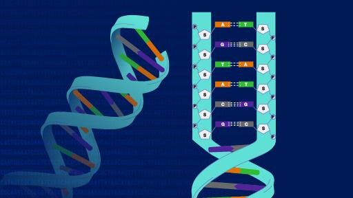 UTI Bacteria Produces Custom DNA Building Blocks From Human Urine!