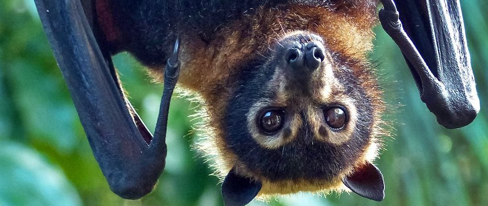 Bats Have An Innate Feel For The Speed Of Sound, Scientists Found!