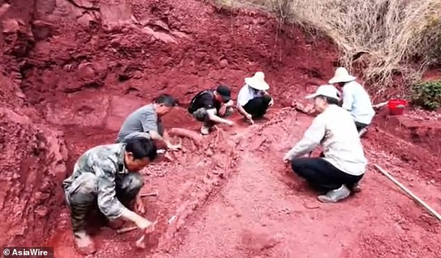 Huge Dinosaur Skeleton Dug Up In China! – Nearly 70% Intact Monster Dates Back To 180 million Years Ago!