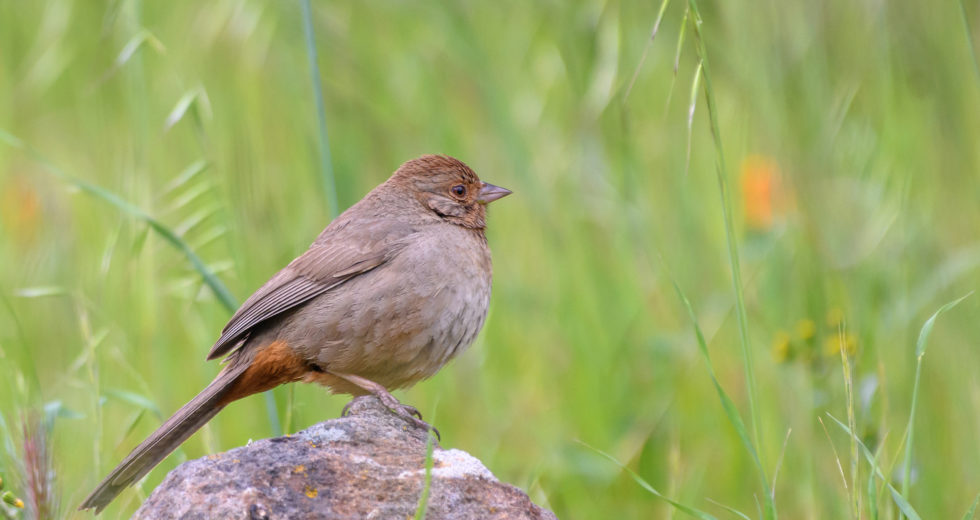 How Quantum Mechanics Help Birds Detect Magnetic Fields