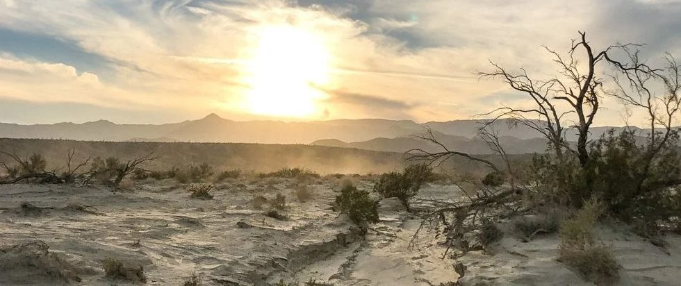California's Deserts Are Starting to Lose All the Vegetation, New Study Explains