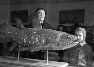 Giant Fish Species Can Live for About 100 Years