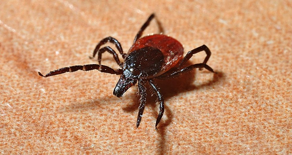 Easy Guide for What to Do if a Tick Bites You
