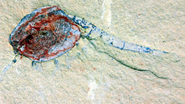 Peculiar Event Turned a Nursery Into a Graveyard 500 Million Years Ago