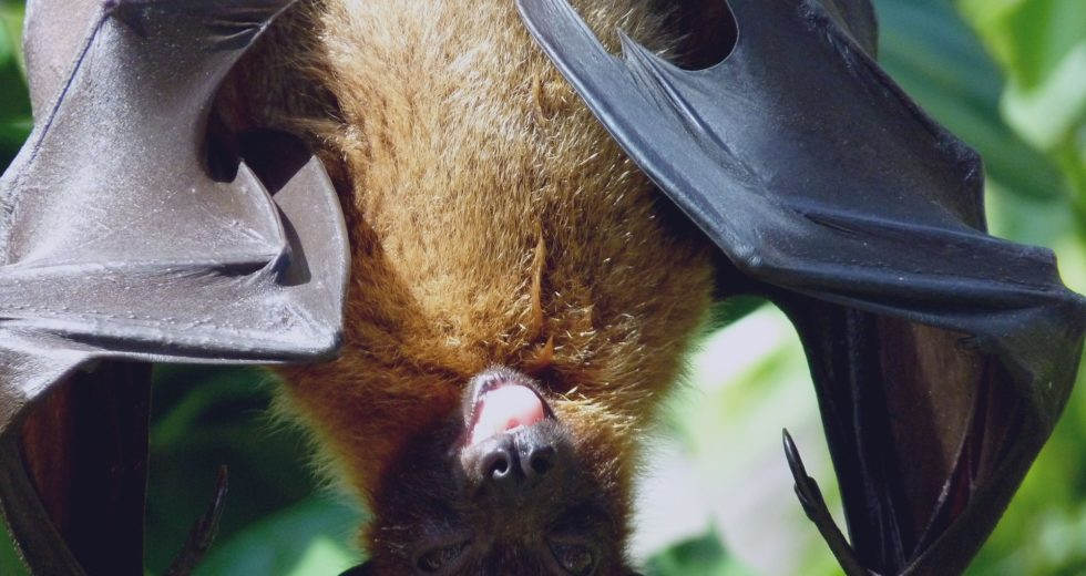 Three Bats Test Positive for Rabies in Jefferson County (Colorado, USA) – Caution Becomes Mandatory