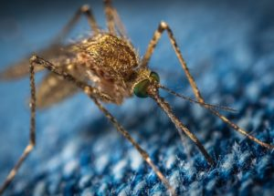 The West Nile Virus is Increasing in California, Killing the First Person for 2021