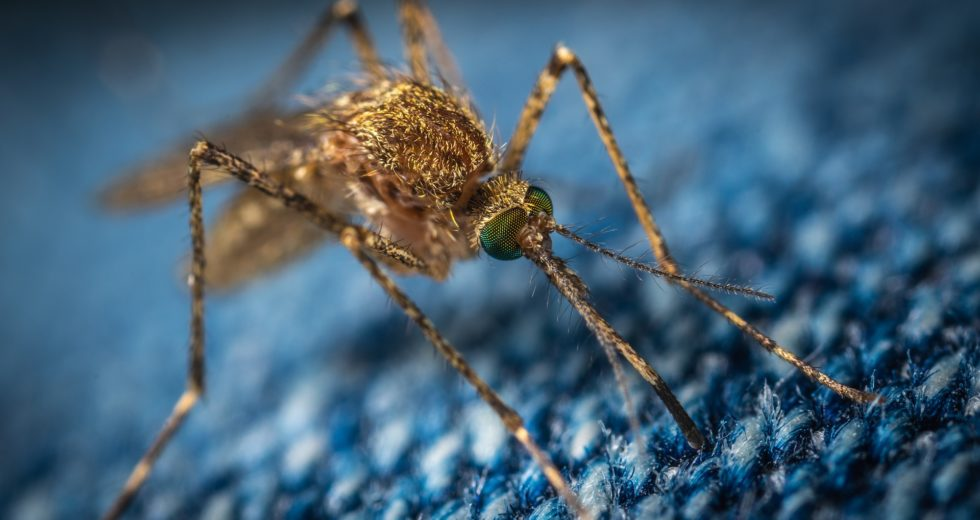 More Mosquitoes in Washington Are Awaited in Hotter Summers