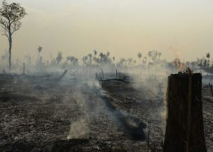 See How the Amazon's Fires and Deforestation Have Become an Issue to Public Health