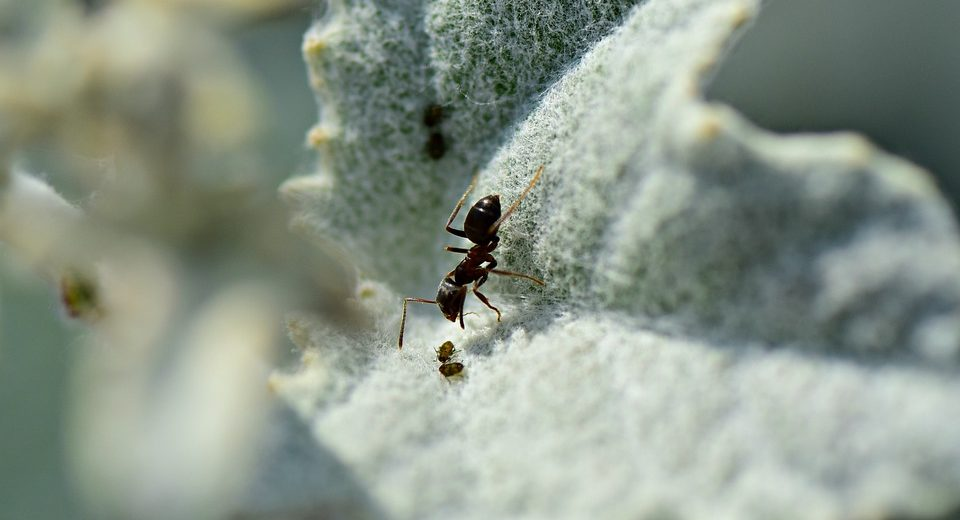 The Best 5 Ant Farms On The Market