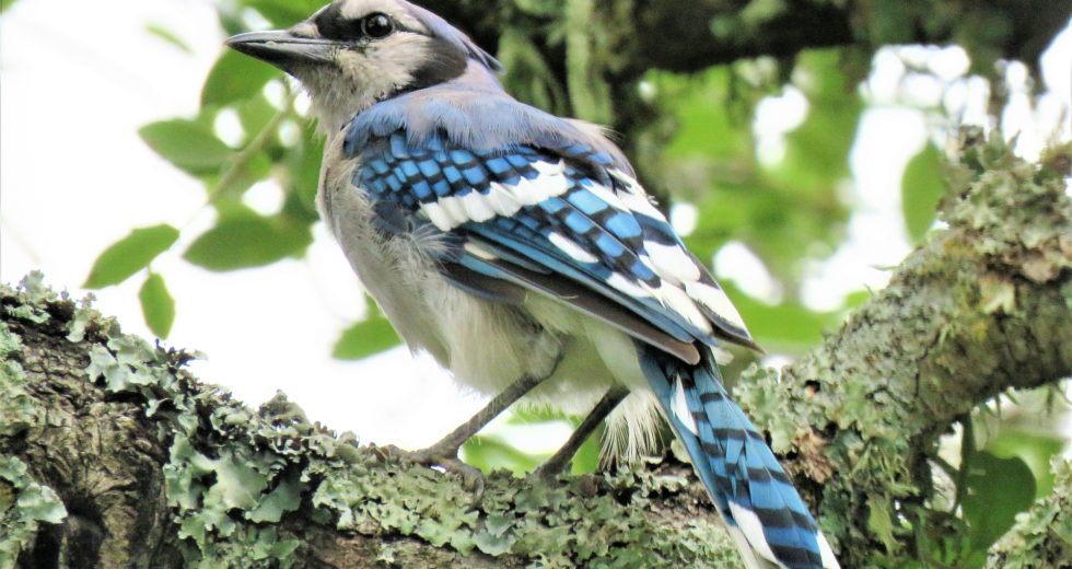 Mysterious Disease Blinding Birds Disappears Suddenly