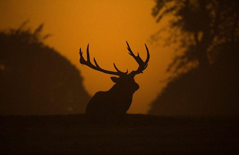 Wildlife is Threatened by Shrinking Habitat and Won't Survive in the Long Term