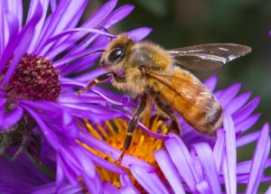 Bees Are Dying Because of the Agrochemicals Used, New Study Explains