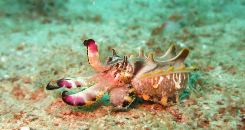 These Marine Creatures Can Form Complex Memories Just as Humans Do