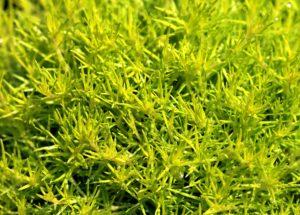 Ragweed Season Allergy Symptoms – Extremely Similar To Covid-19