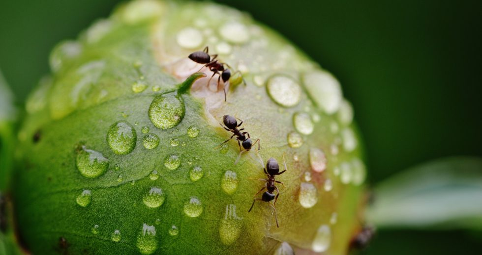 Scientists Explain Why Ants Have Super Strong Teeth