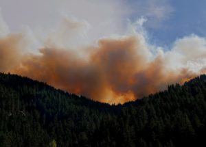 Find Out How the Mortality Rate Increased Due to Wildfires: New Data Available