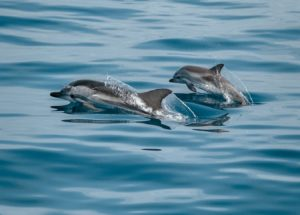 Faroe Islands Whaling Hunt Resulted in Over 1.400 Dead Dolphins