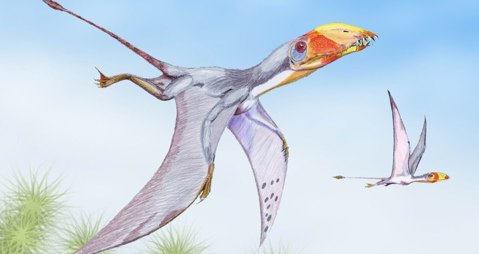 The Bones of the Flying Lizard of the Jurassic Era Unearthed in Chile
