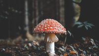 Can Eating Mushrooms Help With Depression? Science Answers